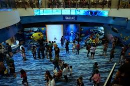 Un petit tour à l'Aquarium