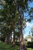 De bien drôles d'arbres