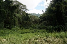 Un paysage de Jurasik Park
