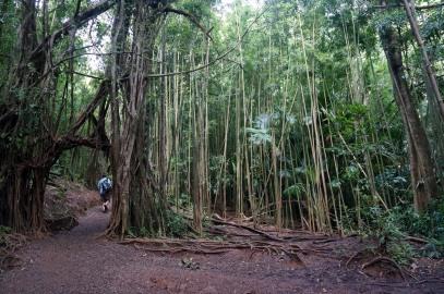 Une forêt de Bambous