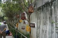Des cages et des oiseaux un peu partout
