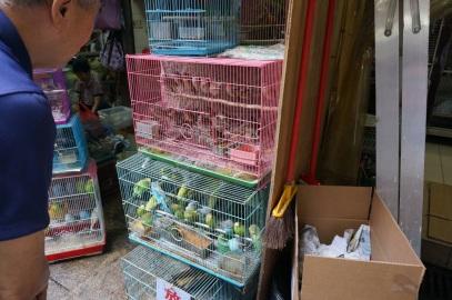 D'autres oiseaux