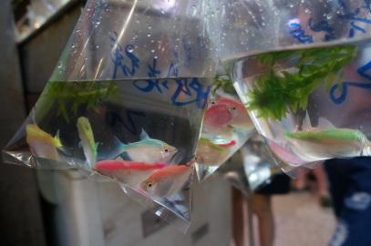 Des poissons du marché de poisson