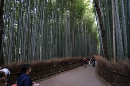 La forêt de Bambou