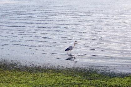Un oiseau sur la berge