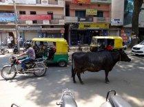 Tiens, une vache, il y avait longtemps que je n'en avais pas vu.