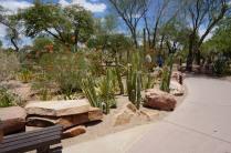 Le jardin de Cactus