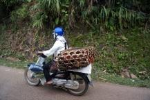 Transport de volailles