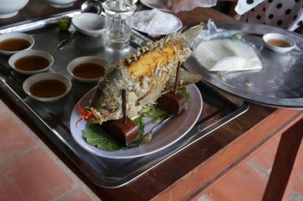 Notre dîner (poisson éléphant) qui nous regarde d'une drôle de facon