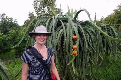 Un arbre de pitahaya (dragonfruit)