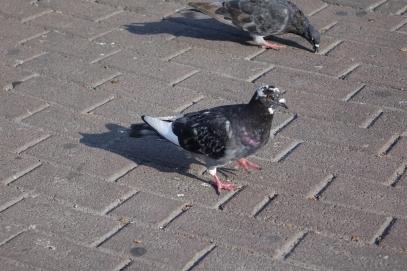 Tiens, nos premiers oiseaux