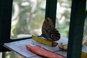 Un papillon à l'arrêt déjeuner