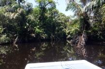 Une ballade en pleine jungle