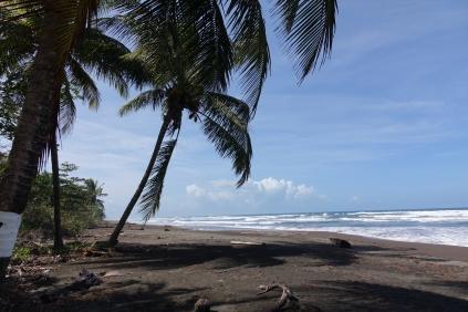 Notre marche dans le Parc Tortuguero et la plage tout près