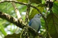 Concours de photo d'oiseau bleu