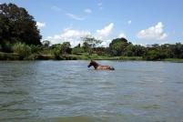 Un cheval traverse la riviere