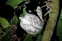 Un paresseux en haut d'un arbre