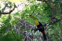 Et finalement, le toucan froot loop.