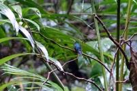 Un colibri qui se repose (il était vraiment loin)