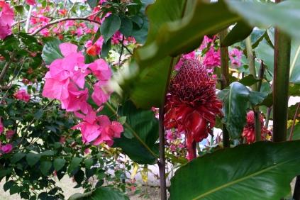 On se dirait dans un jardin botanique un peu partout