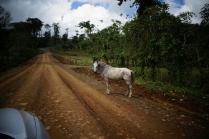 Un chaval seul sur la route