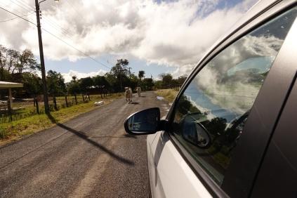 On rencontre mem des vaches sur la route