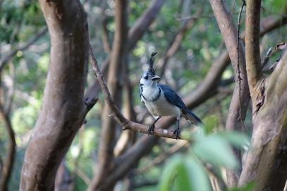 Oiseau pres de l'hotel (avec le vent, il peut bien etre depeigné)