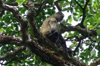 Enfin, un singe. Nous le laissons indifférend