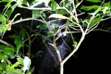 Les araignées travaillent la nuit
