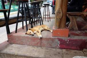 Un happy dog, on voit beaucoup de chiens qui se promènent un peu partout