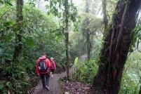 En PM, le tour des ponts suspendus au Selvatura Park