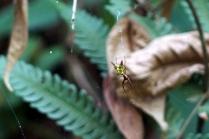 Un araignée du diable... on sait pourquoi