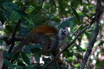Des singes aaignées... ils sont tres actifs, surement trop de café