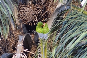 Tiens 2 perroquest au centre d'un palmier, tout une nuit de noces