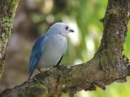 Cet oiseau prend la pose (prix photo de la journée pour Francois)