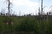 Il y a eu un feu de forêt ici il y a quelques années