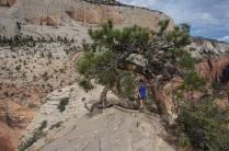 Des arbres poussent si haut