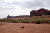 Un chien seul dans l'immensité du Parc
