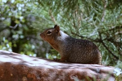 Quel est cet animal? Un écureuil qui cache sa queue