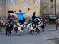 Un troupeau de chèvres, faudrait bien que je monte quelque part