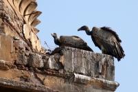 Les vautours nous guettent.