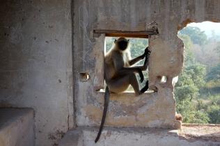 Un singe bien installé