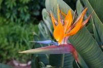 Enfin des plantes tropicales