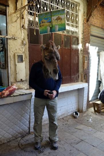 Je me fais toujours traiter de chameau (en fait c est un dromadaire)
