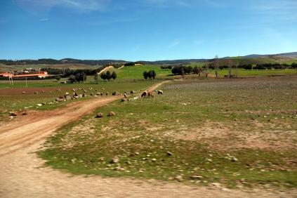 Nous avons vu beaucoup de moutons au cours du voyage