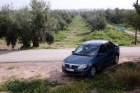 Un bon nombre d'oliviers y vivent, le Maroc est le 5ieme producteur mondial de produit de l'olives