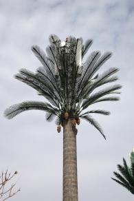 Un faux palmier pour cacher les antennes cellulaires, vive le progrès
