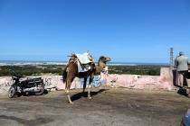 La ville de Essaouira vu d'un belvédère