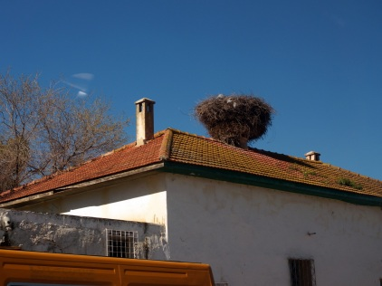 Un nid de cigogne