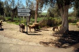 Nous quittons Volubilis pour Meknès